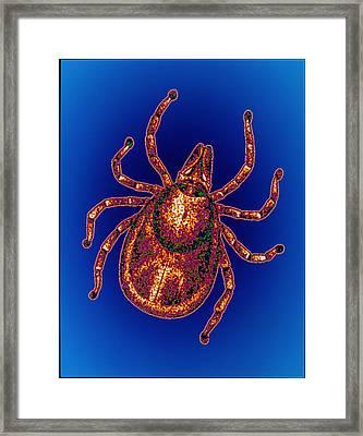 Lyme Disease Tick Framed Print by Pasieka