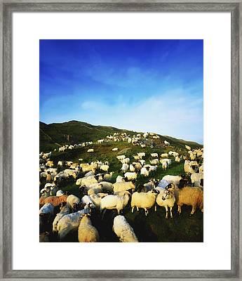 Maam Cross, Co Galway, Ireland Sheep Framed Print