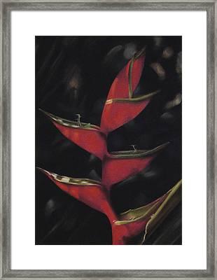 Macaw Flower - Heliconia Bihai Framed Print