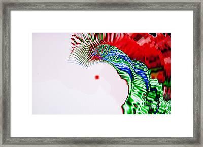 Macaw Framed Print by Tashia Peterman