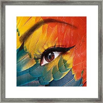 Macaw Framed Print by Yosi Cupano