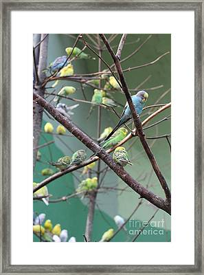 Macaw Framed Print by Yuro Choi