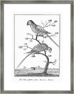Macaws, 1796 Framed Print by Granger