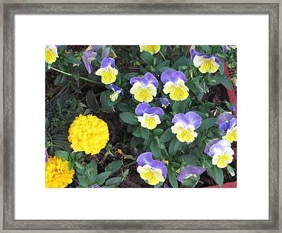 Macro Flower Basket 1 Framed Print by Amy Bradley