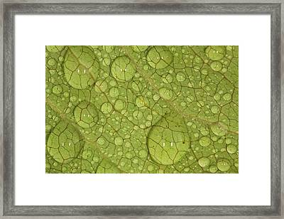 Macro Image Of A Magnolia Leaf Framed Print by Laszlo Podor Photography