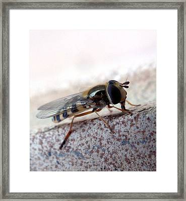 Macro Insect Framed Print by Ernestas Papinigis