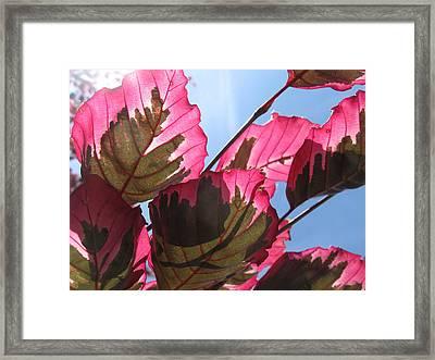 Macro Leaves Framed Print by Sean Seal