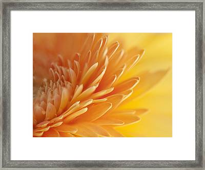 Macro Of Petals Framed Print