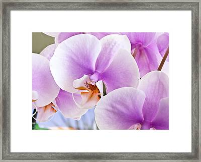 Macro Pink Orchids Framed Print by Joe Carini - Printscapes