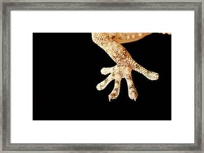 Macro Reptil Framed Print by Izlemus