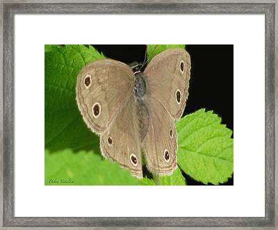 Macro Tan Butterfly Framed Print by Debra     Vatalaro