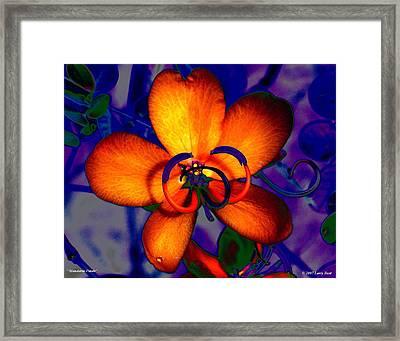Madarin Petals Framed Print