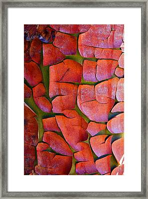 Madrone Framed Print