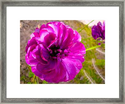 Magenta Magic II Framed Print
