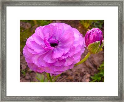 Magenta Magic Framed Print