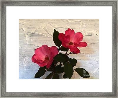 Magenta Roses Framed Print by Marsha Heiken