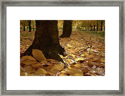 Magic Autumn  Framed Print