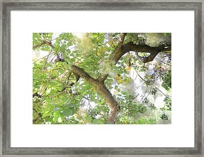 Magic Bush Framed Print by Bruno Santoro