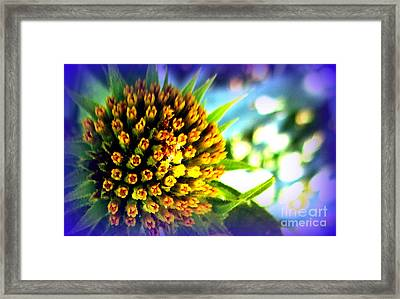 Magic Flower Framed Print by Maria Scarfone