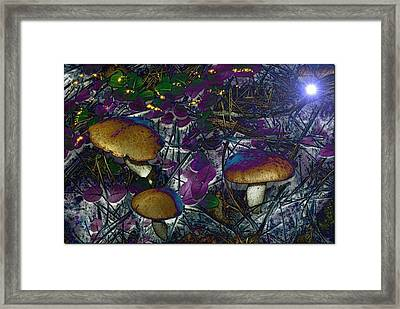 Magic Mushrooms Framed Print by Barbara S Nickerson
