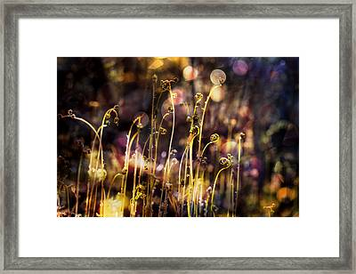 Magic Of Spring Framed Print