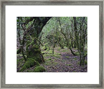 Framed Print featuring the photograph Magical Forest by Hugh Smith