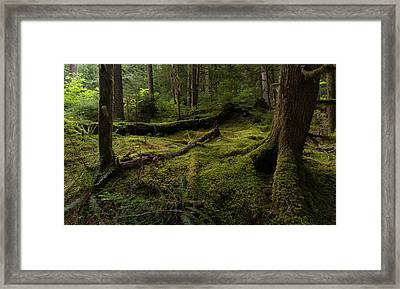 Magical Forest Framed Print by Mike Reid