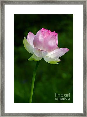 Magical Lotus Flower Framed Print