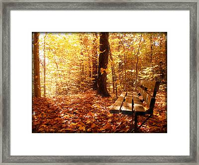 Magical Sunbeams On The Best Seat In The Forest Framed Print by Chantal PhotoPix