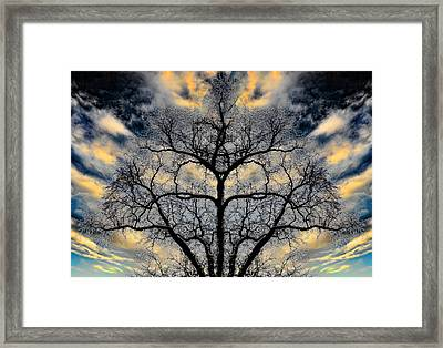 Magical Tree Framed Print by Hakon Soreide