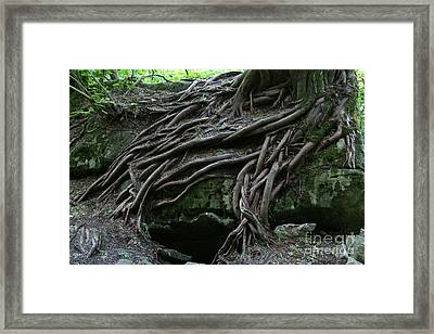 Magical Tree Roots Framed Print by Chris Hill