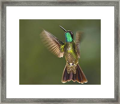 Magnificent Framed Print by Tony Beck
