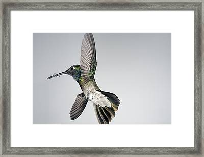 Magnificent Victorious Warrior Framed Print by Gregory Scott