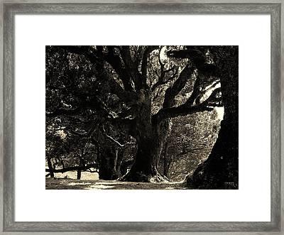 Magnificient Oldesst Tree Framed Print by Prashant Ambastha