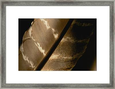 Magnified View Of A Red-tailed Hawk Framed Print