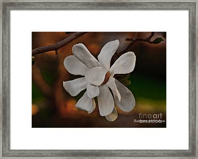 Framed Print featuring the photograph Magnolia Bloom by Barbara McMahon