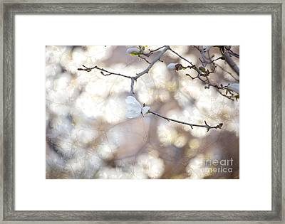 Magnolia Dream Framed Print by Susan Cole Kelly