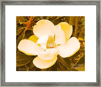 Magnolia In Color Framed Print by Lorraine Louwerse