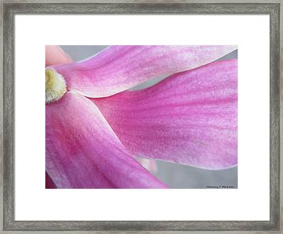 Magnolia In Half Framed Print