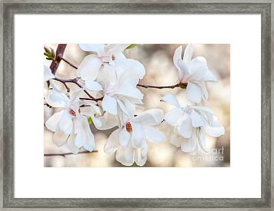 Magnolia Spring Framed Print by Susan Cole Kelly
