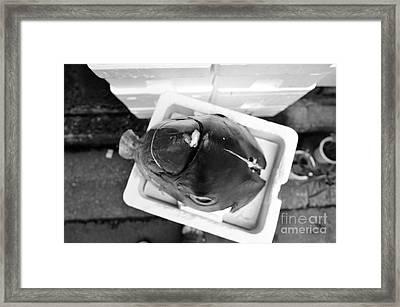 Maguro I Framed Print by Dean Harte