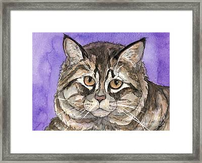 Maine Coon Cat Framed Print by Cherilynn Wood