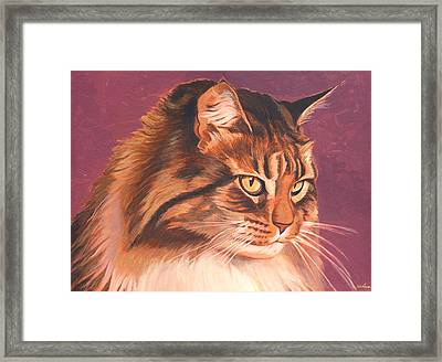 Maine Coon Portrait Framed Print by Shawn Shea