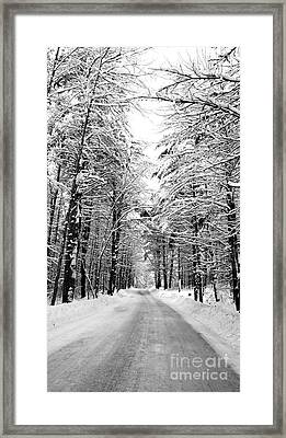 Maine Deep Woods Tall Trees Framed Print