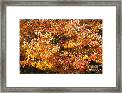 Maine'safall Leaves Framed Print by Charles  Ridgway