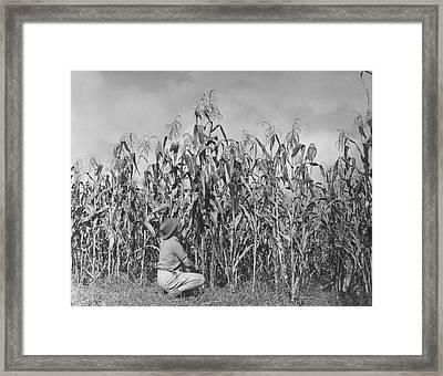 Maize Farming Framed Print by Bert Hardy