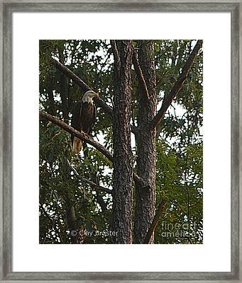Framed Print featuring the photograph Majestic Bald Eagle by Clayton Bruster
