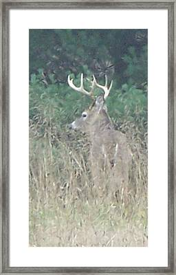 Majestic Buck Framed Print