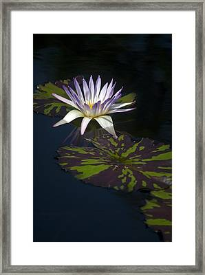 Majestic Framed Print by Elsa Marie Santoro