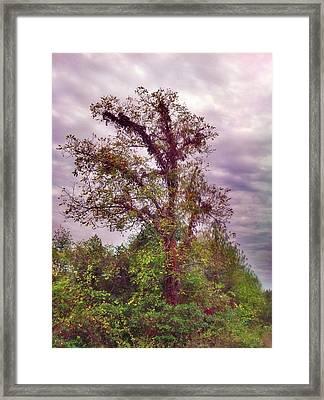 Majestic  Framed Print by Janice Spivey